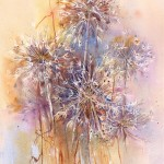 Allium Seedheads - Watercolour