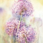 Allium - Watercolour