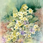 Primroses - Watercolour
