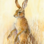 Watching Hare - Pen and wash